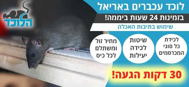 לוכד עכברים באריאל 24 שעות